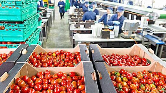 2020年中国有机食品行业市场现状与发展前景分析 有机食品深加工成趋势「组图」